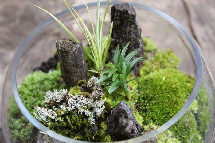 ガラスの中で育てる小さなコケの森¥n(ガラスの器 直径12cm /高さ15cm)
