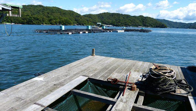 イカダ釣り体験